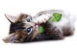 Игрушки с кошачьей мятой