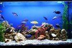 Грунт, галька для аквариумов