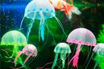 Декор из силикона для аквариумов