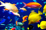 Универсальный  для рыб