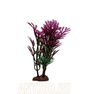 ArtUniq Hottonia purple Set 6x10