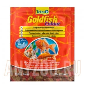 183704 TetraGoldfish Colour