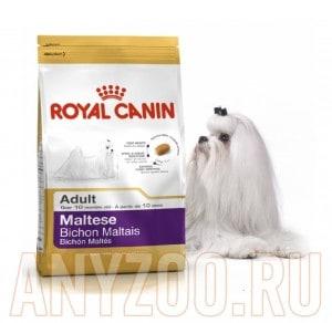 Купить Royal Canin Maltese Adult-  Роял Канин сухой корм для Мальтийских болонок (Мальтезе) от 10месяцев