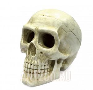 """ArtUniq Large Skull Декоративная композиция """"Большой череп"""", из 2х частей (ART-2212120)"""