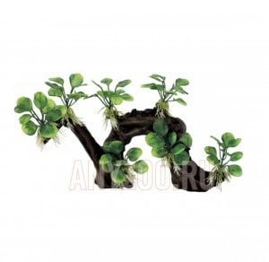 ArtUniq Branched Driftwood With Anubias nana