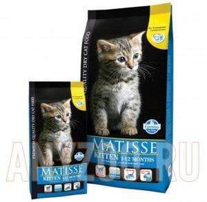 Matisse Premium Kitten