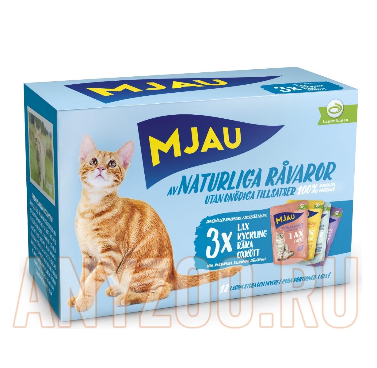 фото кошек переноски пластиковые для