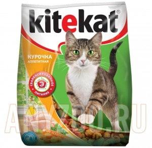 KiteKat