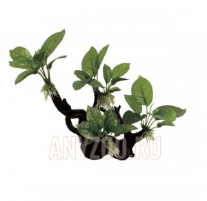 ArtUniq Branched Driftwood With Anubias