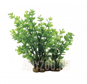 ArtUniq Bacopa red-green