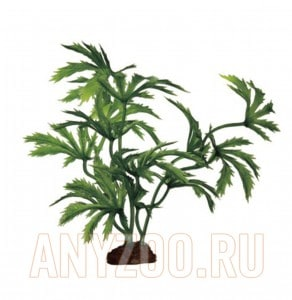 ArtUniq Abutilon Set 6x10