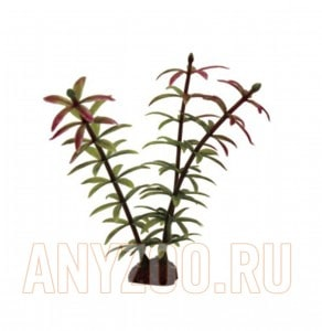 ArtUniq Elodea red-green Set 6x10