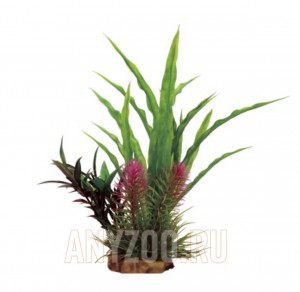 ArtUniq Cryptocoryne mix