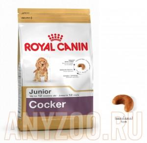 Купить Royal Canin Cocker Junior- Роял Канин сухой корм для щенков Кокер-спаниеля