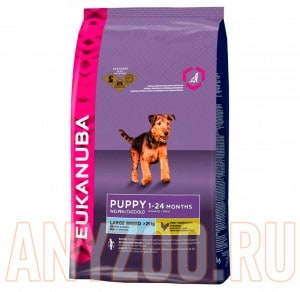 Eukanuba Dog Puppy & Junior Large Breed