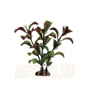 ArtUniq Ludwigia red-green Set 6x10