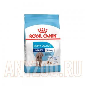 Купить Royal Canin Maxi Junior Activ -для щенков   с высокими энергетическими потребностями с 2 до15/18 мес