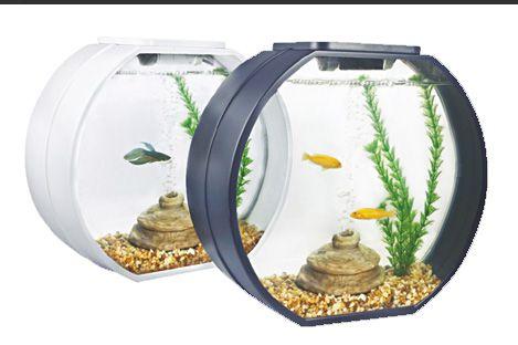 Рыба купить недорого интернет магазин