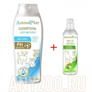 Animal Play