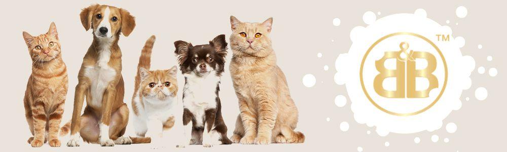 cat agility course